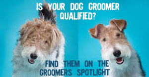 A meme that won't bite. There is a picture of two wirefox terriers side by side. One has a horrible haircut and one is groomed. Is your dog groomer qualified?